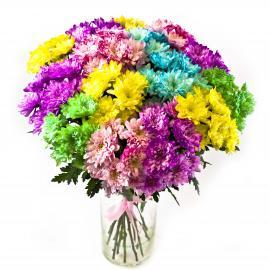 15 кустовых хризантем Paint разного цвета (микс)