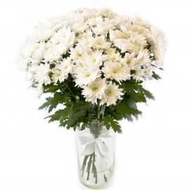15 белых кустовых хризантем