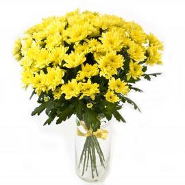 15 желтых кустовых хризантем