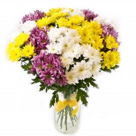 15 кустовых хризантем разного цвета (микс)