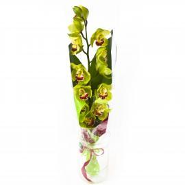 Букет из зеленой орхидеи и листьев аспидистры