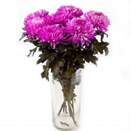 7 розовых хризантем Антонов