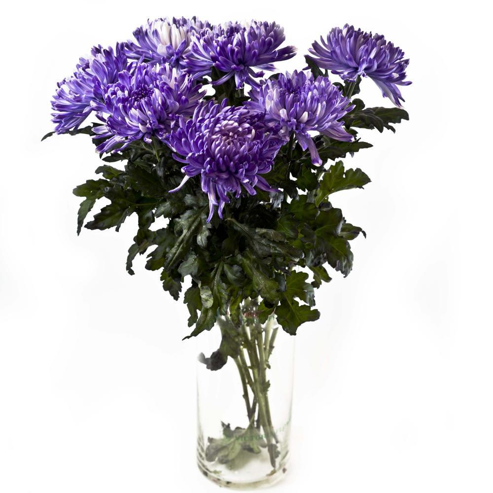 7 синих хризантем Антонов