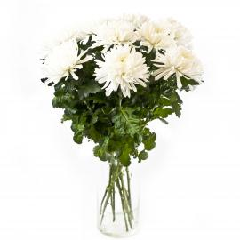 11 белых хризантем Антонов