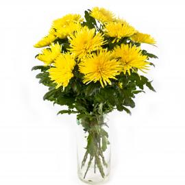 11 желтых хризантем