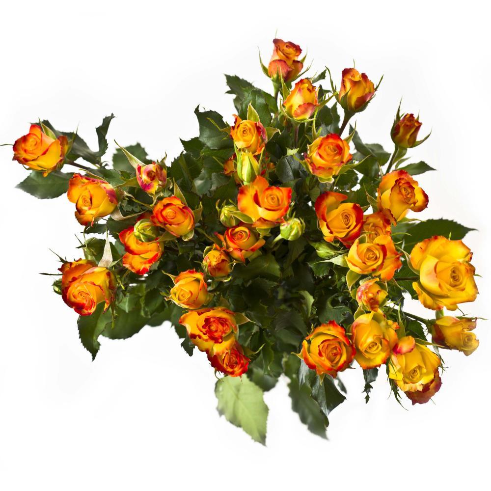 5 желто-оранжевых кустовых роз 40 см производство Кения