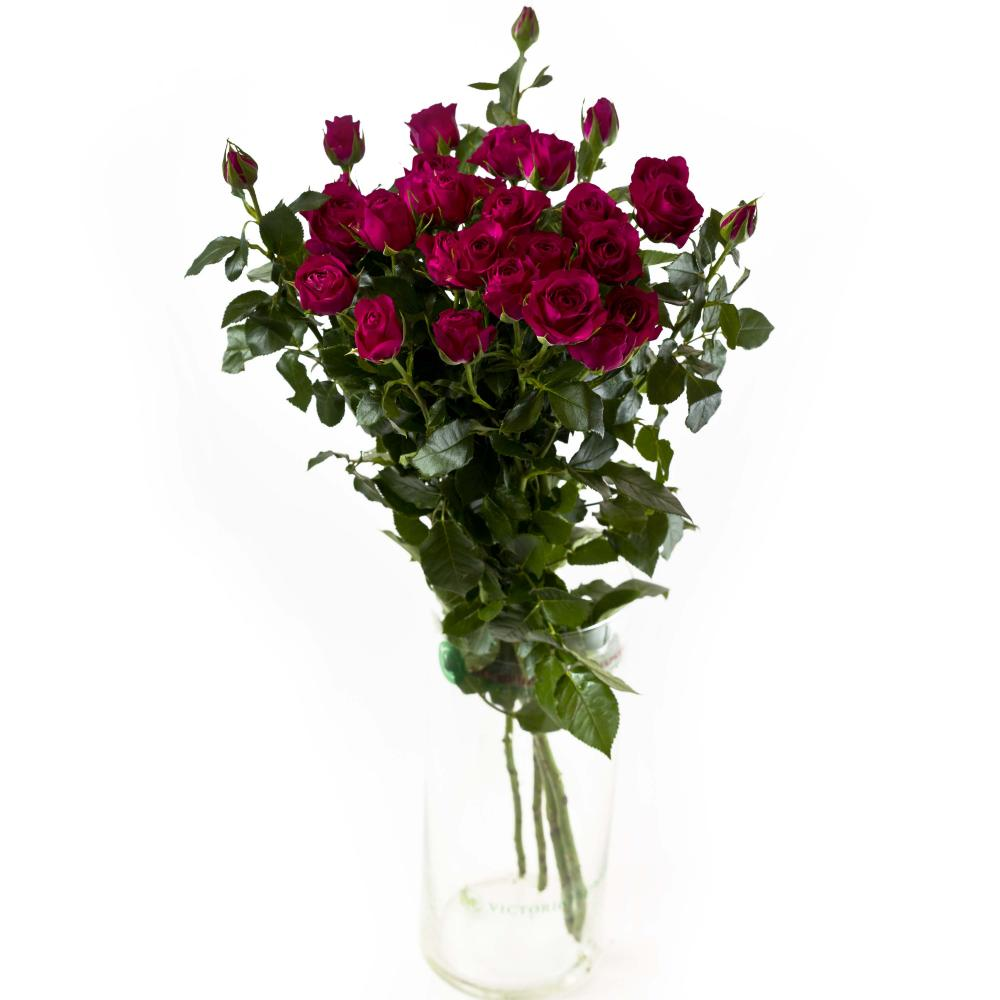 5 красных кустовых роз 40 см производство Кения