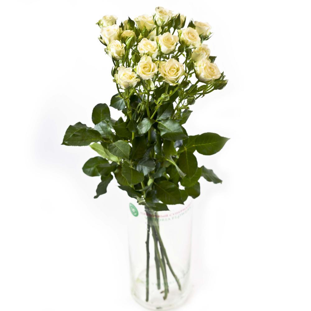 5 белых кустовых роз 40 см производство Кения